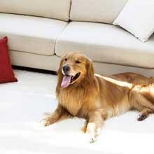 Чистка мягкой мебели от животных